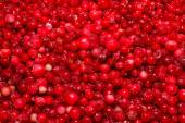 Background cowberry — Stock Photo