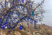 Evil eye tree — Stock Photo