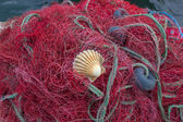 Fishing nets with shell — Stock Photo