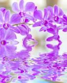 Purpurowa orchidea — Zdjęcie stockowe