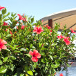 Red flowers near pool — Stock Photo #67993425