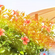 Red flowers near pool — Stock Photo #68054477