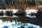 Winter Willow Reflection — Foto de Stock