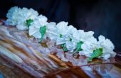 Lined Up Carnations — Stock Photo