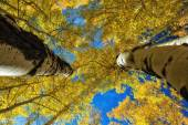 Betwen Natures Giants — Stock Photo