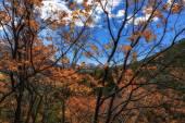 Through the Orange Leaves — Stock Photo