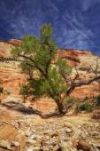 Living in Zions — Stock Photo