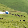 LITANG, CHINA - Jul 18 2014: Grasslands at Litang town. a famous Tibetan town of Litang, Sichuan, China. — Stock Photo #65132365