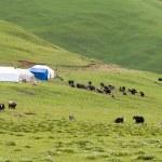 LITANG, CHINA - Jul 18 2014: Grasslands at Litang town. a famous Tibetan town of Litang, Sichuan, China. — Stock Photo #65132365