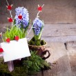 Hyacinths with empty white card — Stock Photo #56142159