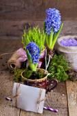 スパ塩とヒヤシンスの花 — ストック写真
