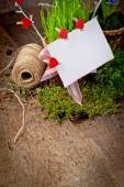 Paper card on green grass in pots — Stock Photo