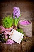 Färska blommor hyacinter. — Stockfoto