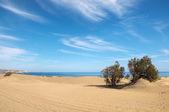 Sanddüne wüste — Stockfoto