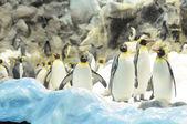 黑色和白色彩色的企鹅 — 图库照片