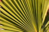Textures Of Green Palm Leaves — Photo