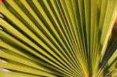 Textures Of Green Palm Leaves — 图库照片