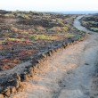 Pathway in the Volcanic Desert — Stock Photo #64092411