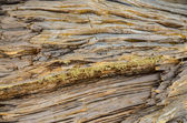 Trunk Texture Gnarled Juniper Tree — Stock Photo