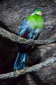 Parrot Tropical Bird — Stock Photo