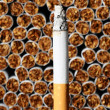 Tobacco Industry — Stock Photo #68433073