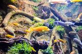 Tropické akvárium — Stock fotografie