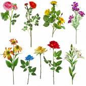 Blooming wildflowers set — Stock Photo