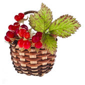 Stone Bramble berries — Stock Photo