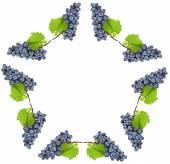 Grapes frame — Stock Photo