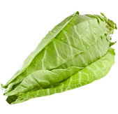 Sweet pointed cabbage — Stock Photo