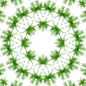 Frame of green grass — Stock Photo