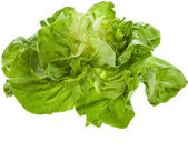 Bunch of Fresh Green Salad — Stock Photo