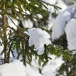 Fir tree branches covered by snow — Stock Photo #60353321