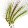 Green wheat sprouts — Stock Photo #60353951