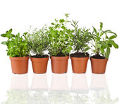 Green Potted Plants — Stock Photo
