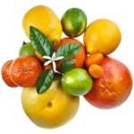 Beautiful citrus fruits isolated — Stock Photo #75656167