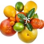 Beautiful citrus fruits isolated — Stock Photo #75656175