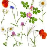 Fresh herbs grass plant flowers — Stock Photo #75657055