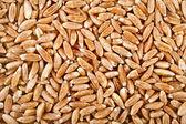 Spelt Grains top view surface — Stock Photo