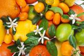 Citrus fruits mixed texture — Stock Photo