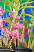 цветы розовые орхидеи — Стоковое фото