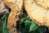 Taze bal tarak — Stok fotoğraf
