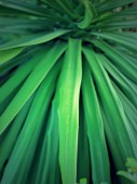 Blurred green leaf — Stockfoto