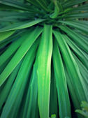 Blurred green leaf — Stock Photo