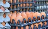 服务器场中的棕色蛋 — 图库照片