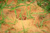 Ants nest with green grass — Stock Photo