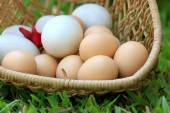 Vintage easter eggs and white eggs — Stock Photo