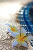 Blurred frangipani flower — Stock Photo