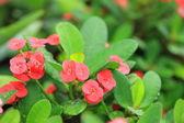 Blurred flowers — Stock Photo