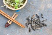 Slunečnicová semena a mladé zelené sazenice — Stock fotografie